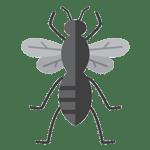 Hornet Pest Control